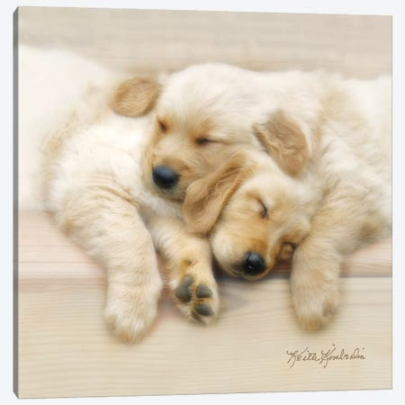 Nap Friends Canvas Print #KKI19} by Keith Kimberlin Art Print