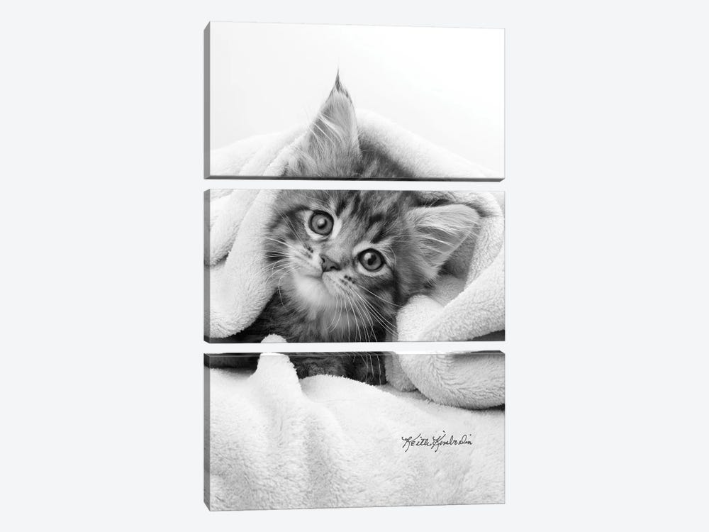Bug In A Rug by Keith Kimberlin 3-piece Canvas Art Print