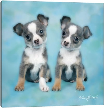 Twinning Canvas Art Print