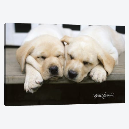 Cheek To Cheek Canvas Print #KKI6} by Keith Kimberlin Canvas Art Print