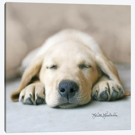 Dreaming of Kibble Canvas Print #KKI9} by Keith Kimberlin Canvas Art