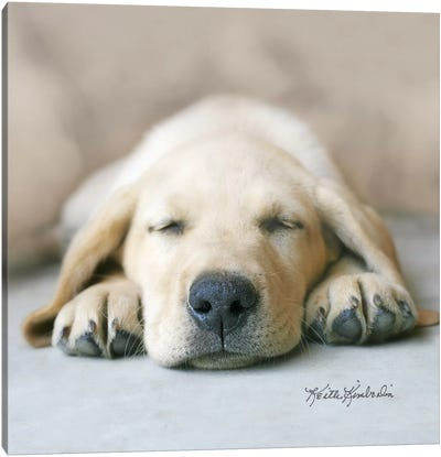 Dreaming of Kibble Canvas Art Print