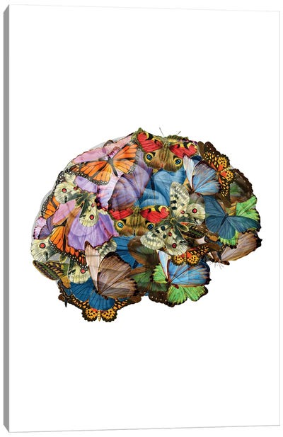 Butterflies In My Brain Canvas Art Print