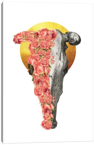 Boho Bull Skull Canvas Art Print