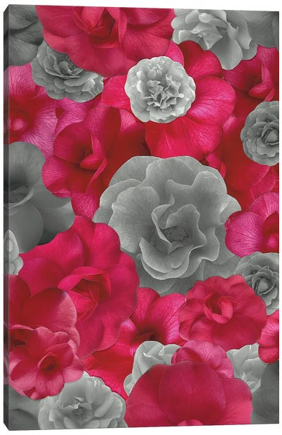 A Storm Through Rose Colored Glasses Canvas Art Print