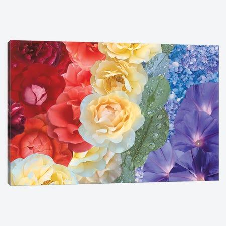 Rainbow Canvas Print #KKM56} by Kat Kleinman Canvas Art