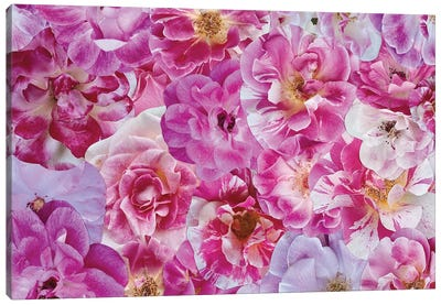 The Power of Pink Canvas Art Print