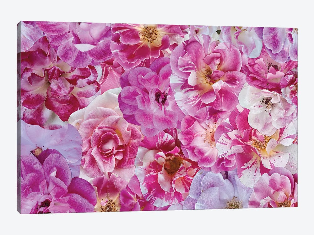 The Power of Pink by Kat Kleinman 1-piece Art Print