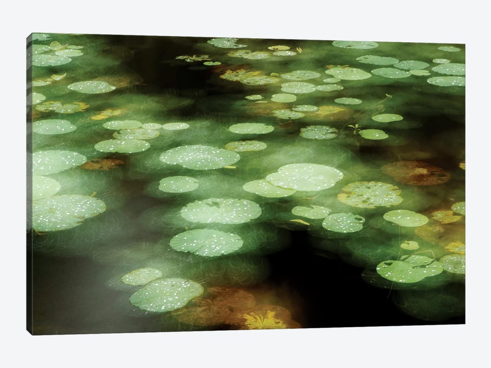 Abstract Of Lily Pads On Pond During Rain, Tawau Hills Park, Sabah, Borneo, Malaysia 1-piece Canvas Artwork