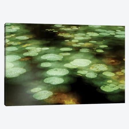 Abstract Of Lily Pads On Pond During Rain, Tawau Hills Park, Sabah, Borneo, Malaysia Canvas Print #KKT1} by Sebastian Kennerknecht Canvas Wall Art