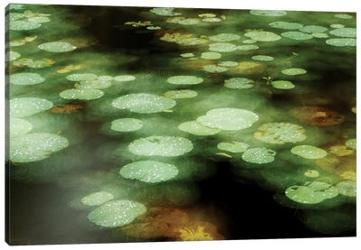 Abstract Of Lily Pads On Pond During Rain, Tawau Hills Park, Sabah, Borneo, Malaysia Canvas Art Print