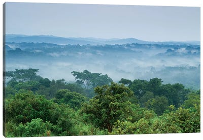Tropical Rainforest, Kibale National Park, Western Uganda Canvas Art Print