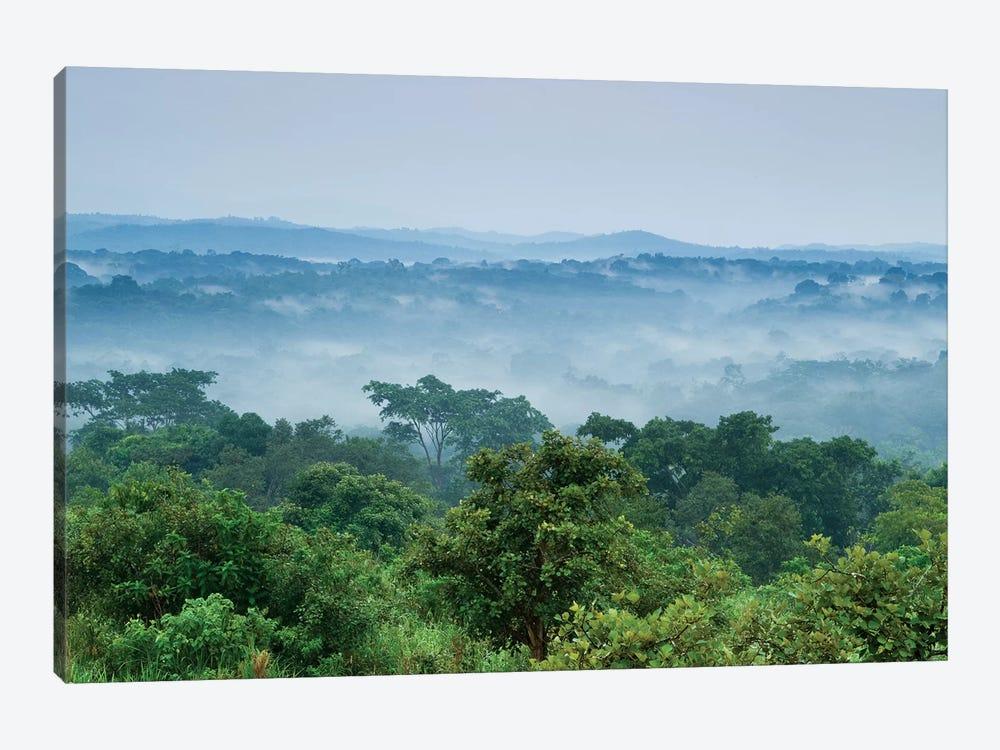 Tropical Rainforest, Kibale National Park, Western Uganda by Sebastian Kennerknecht 1-piece Art Print