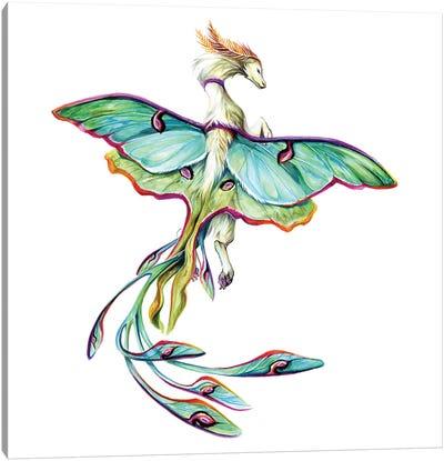 Luna Moth Dragon Canvas Art Print