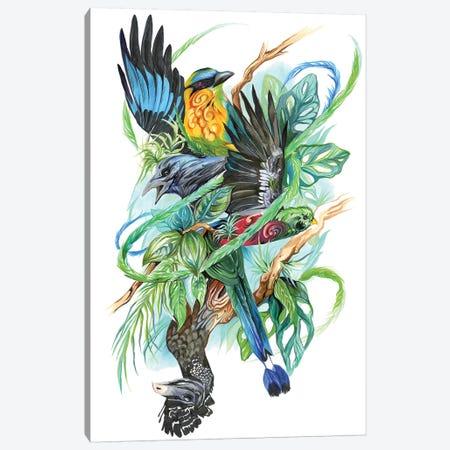Costa Rican Birds Canvas Print #KLI22} by Katy Lipscomb Canvas Art Print