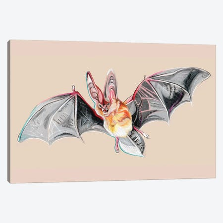Bat Canvas Print #KLI5} by Katy Lipscomb Canvas Artwork
