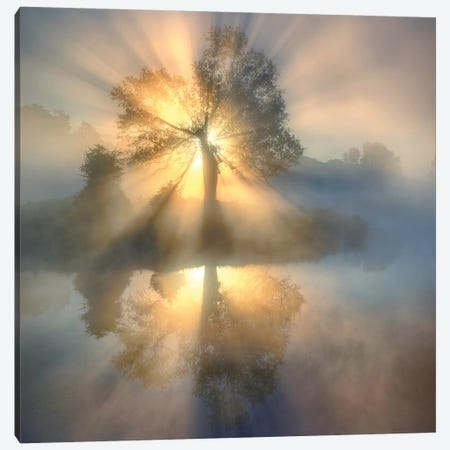 Tree of light Canvas Print #KLR2} by keller Canvas Print
