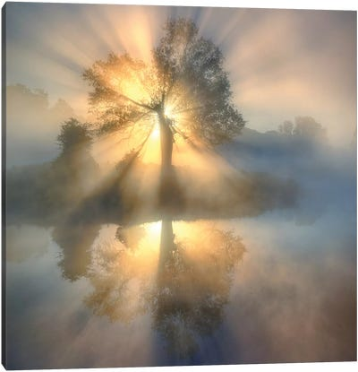 Tree of light Canvas Art Print