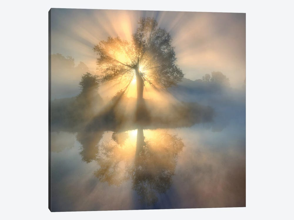 Tree of light by keller 1-piece Canvas Art
