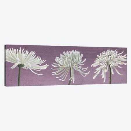 Morning Chrysanthemums V Lavender Canvas Print #KLV18} by Kathrine Lovell Canvas Art Print