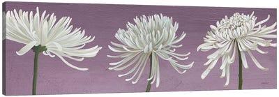 Morning Chrysanthemums V Lavender Canvas Art Print