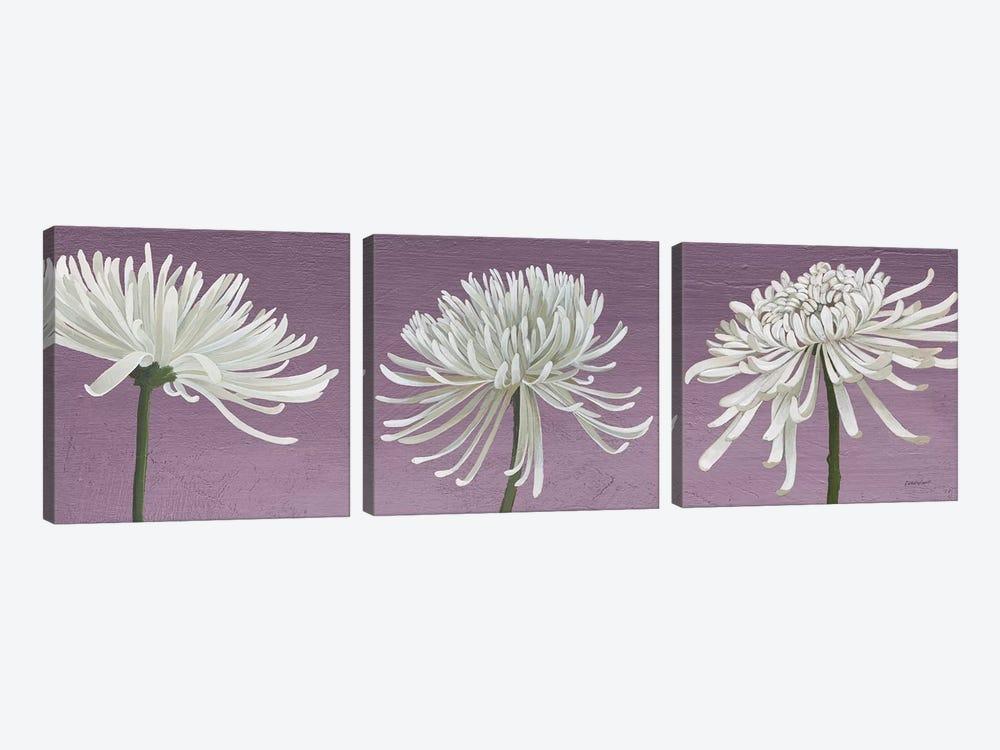 Morning Chrysanthemums V Lavender by Kathrine Lovell 3-piece Canvas Print