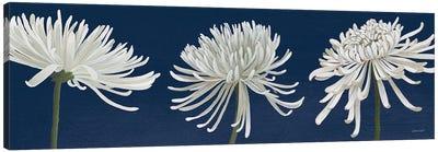 Morning Chrysanthemums V Dark Blue Canvas Art Print