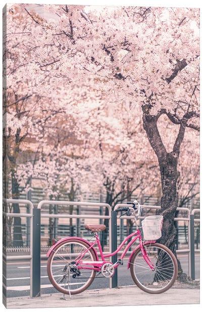 Pink Bike Under Cherry Trees Canvas Art Print