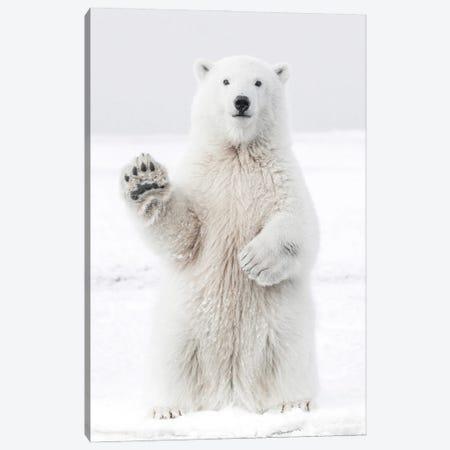 Polar Bear I Canvas Print #KMD120} by Karen Mandau Canvas Print