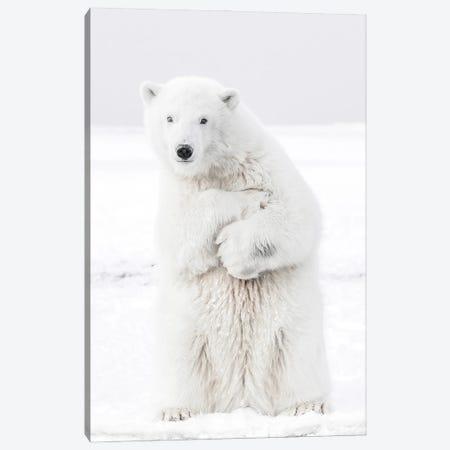 Polar Bear II Canvas Print #KMD121} by Karen Mandau Canvas Art Print