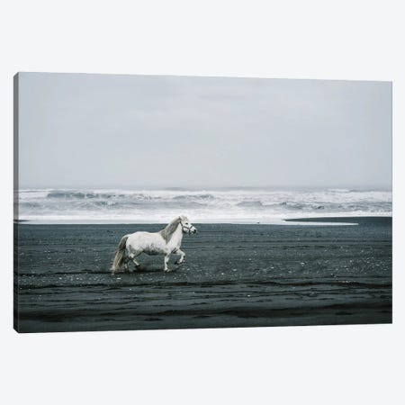 White Horse On A Black Sand Beach In Iceland Canvas Print #KMD156} by Karen Mandau Art Print