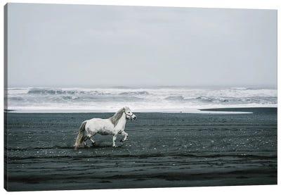 White Horse On A Black Sand Beach In Iceland Canvas Art Print