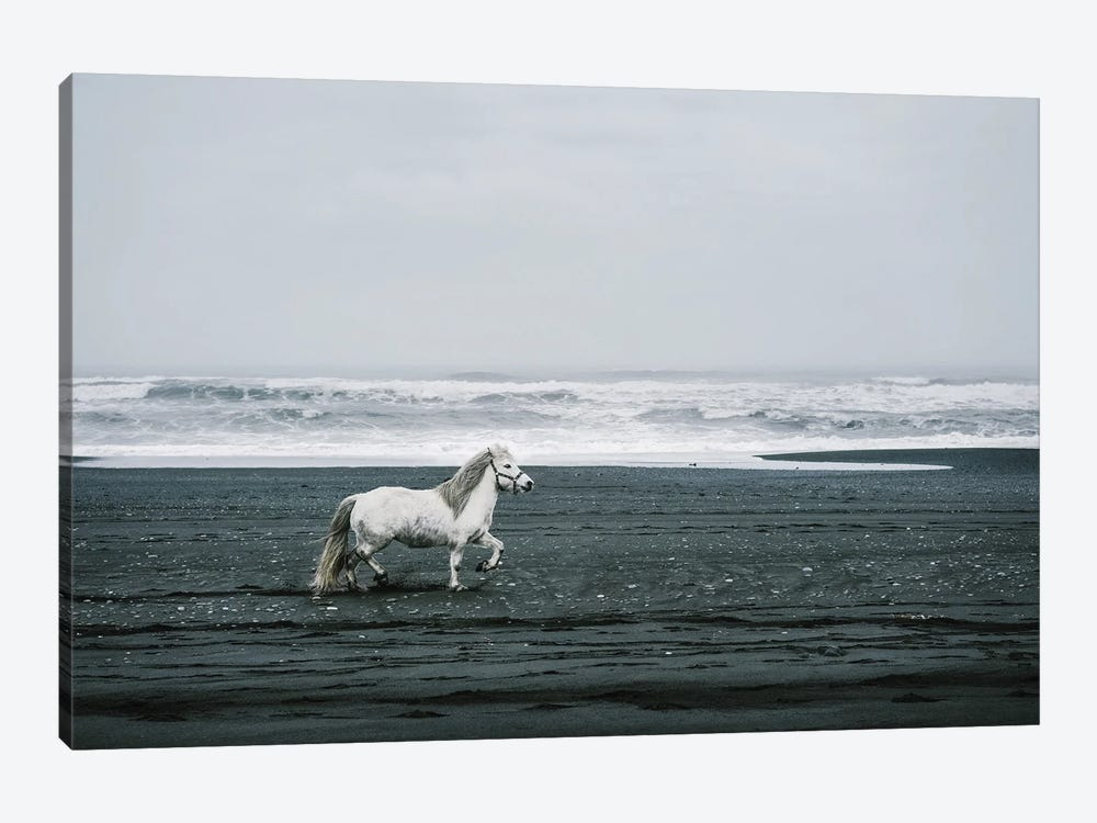 White Horse On A Black Sand Beach In Iceland by Karen Mandau 1-piece Art Print