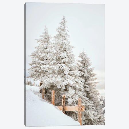 White Pine Trees With A Fence Canvas Print #KMD157} by Karen Mandau Art Print