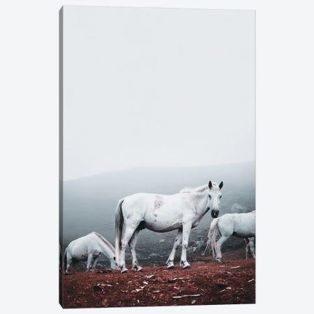 Wild White Horses Canvas Print #KMD160} by Karen Mandau Art Print