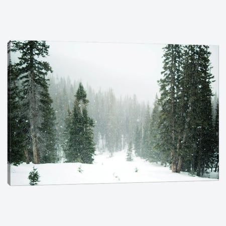 Winter Forest Canvas Print #KMD162} by Karen Mandau Canvas Print