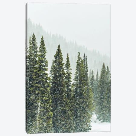 Winter Forest Panorama I Canvas Print #KMD163} by Karen Mandau Canvas Print