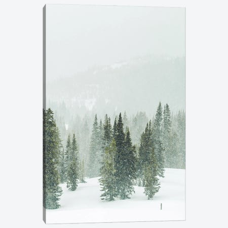 Winter Forest Panorama II Canvas Print #KMD164} by Karen Mandau Canvas Art