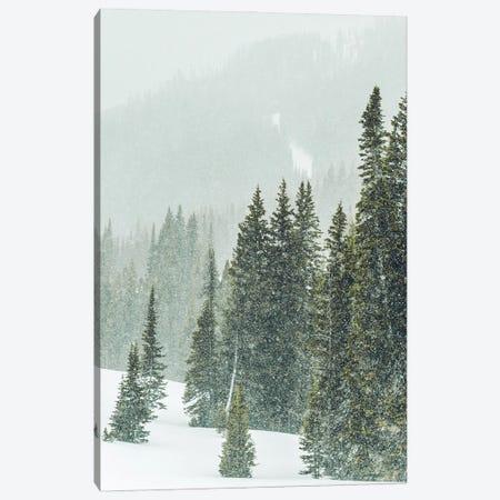 Winter Forest Panorama III Canvas Print #KMD165} by Karen Mandau Canvas Artwork