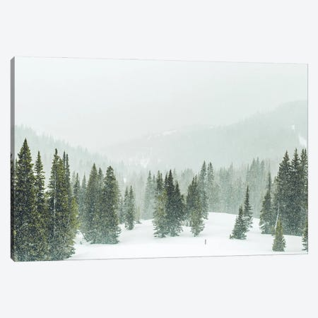 Winter Forest Panorama Canvas Print #KMD166} by Karen Mandau Canvas Artwork