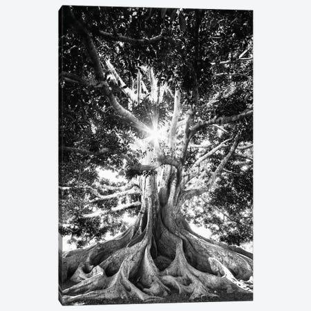 Big Tree In Black And White Canvas Print #KMD17} by Karen Mandau Canvas Print