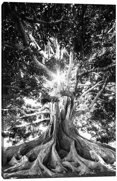 Big Tree In Black And White Canvas Art Print