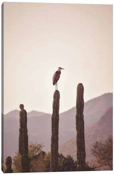 Bird Sitting On Cactus Canvas Art Print