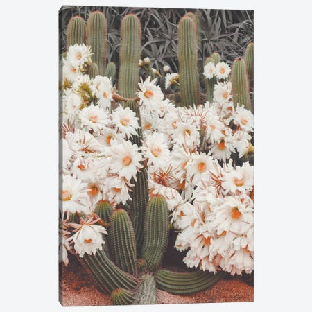 Blooming Cacti Canvas Print #KMD20} by Karen Mandau Canvas Print