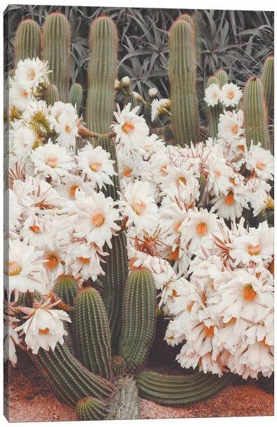 Blooming Cacti Canvas Art Print