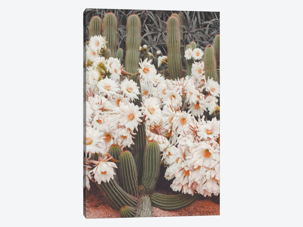 Blooming Cacti by Karen Mandau 1-piece Canvas Artwork