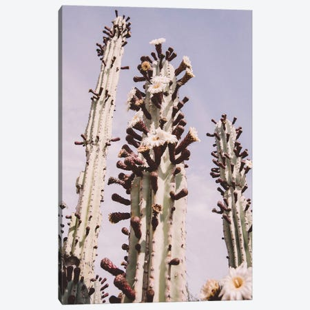 Blooming Cactus Canvas Print #KMD21} by Karen Mandau Canvas Art Print