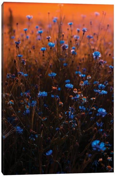 Blue Wildflower Field Canvas Art Print