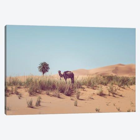Camel In The Desert Canvas Print #KMD34} by Karen Mandau Canvas Print
