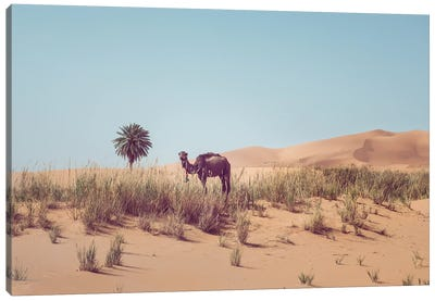 Camel In The Desert Canvas Art Print